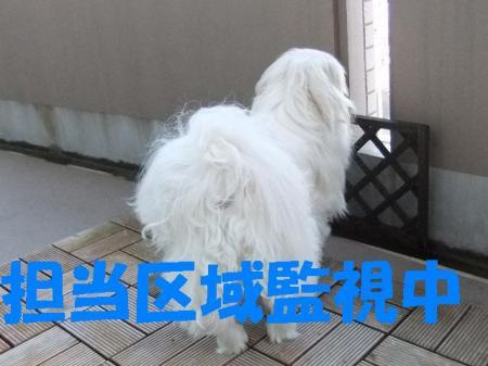 007_convert_20100312082842.jpg
