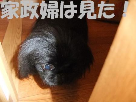007_convert_20100407075147.jpg