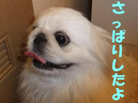 010_convert_20100407075203.jpg