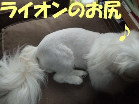 010_convert_20100427085554.jpg