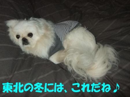 0115004_convert_20110115123218.jpg
