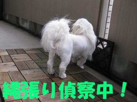 01_convert_20100429080349.jpg