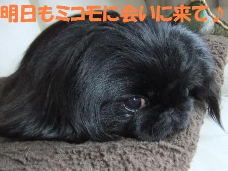 01_convert_20100601080105.jpg