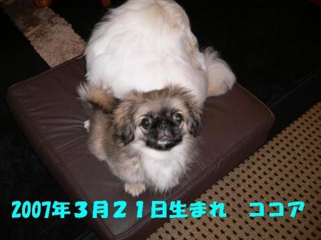 01_convert_20100609143452.jpg