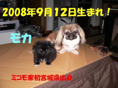 01_convert_20100610084835.jpg