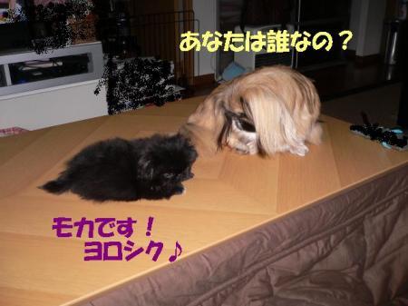 01_convert_20100610170957.jpg