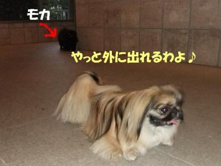01_convert_20100616085703.jpg