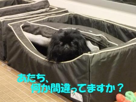 01_convert_20100802141348.jpg