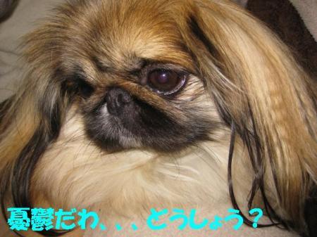 01_convert_20100902140957.jpg