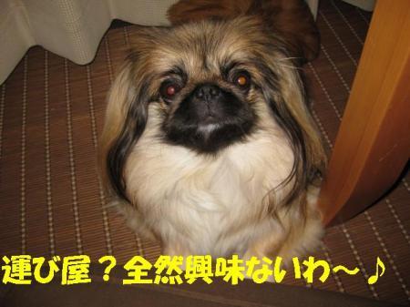 01_convert_20100908093919.jpg