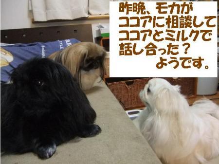 01_convert_20100909102913.jpg
