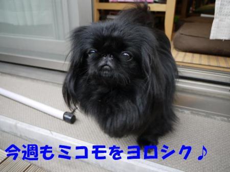 01_convert_20100919102940.jpg