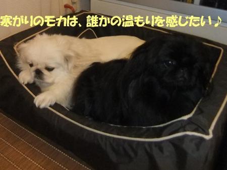 01_convert_20100924081502.jpg