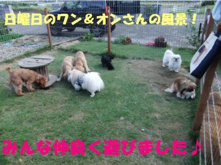 01_convert_20100928165620.jpg