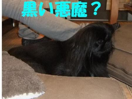 01_convert_20101011195911.jpg