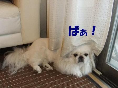 01_convert_20101013120027.jpg