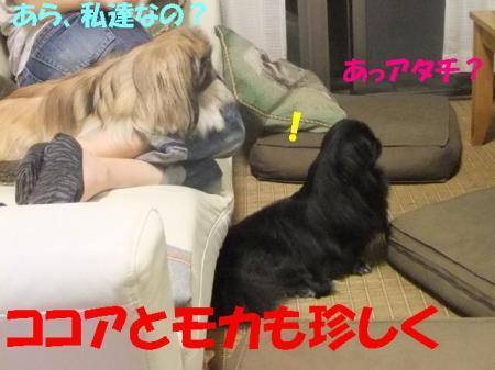 01_convert_20101021135114.jpg