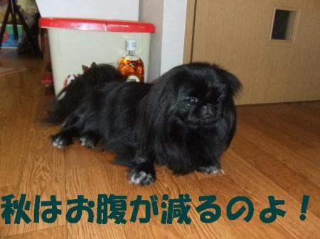 01_convert_20101022152856.jpg