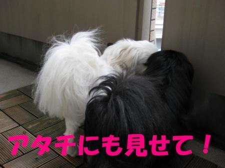 02_convert_20100429080406.jpg