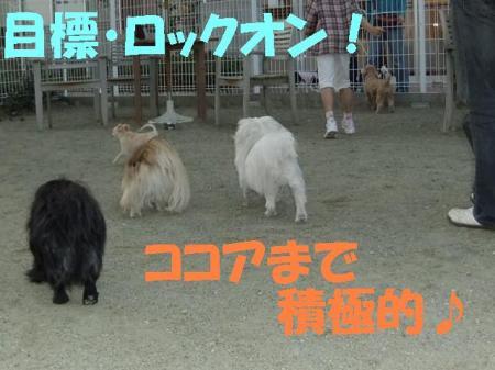 02_convert_20100506075239.jpg