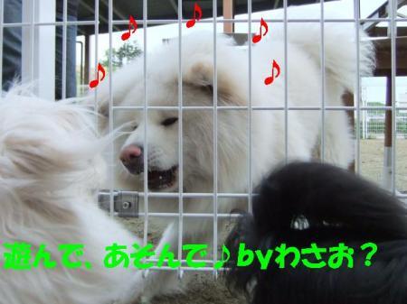 02_convert_20100601080120.jpg