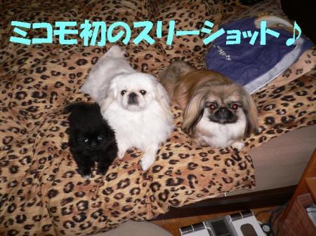 02_convert_20100610084851.jpg