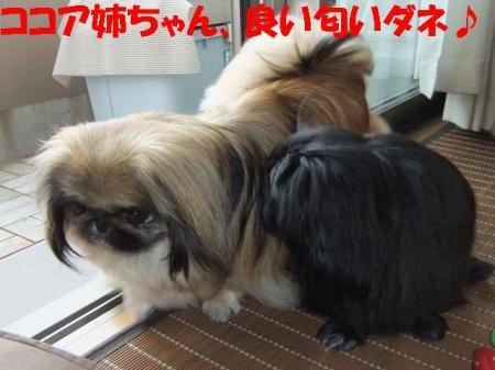 02_convert_20100624081138.jpg