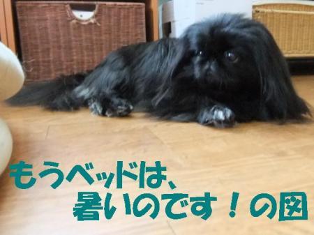 02_convert_20100626092918.jpg