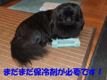 02_convert_20100824075112.jpg