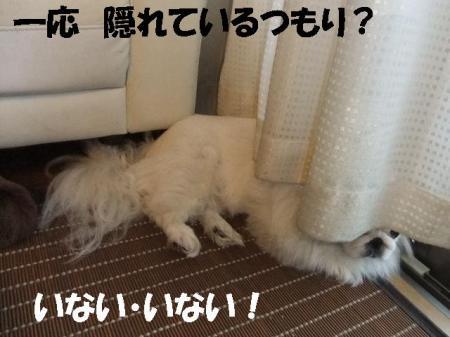 02_convert_20101013120043.jpg