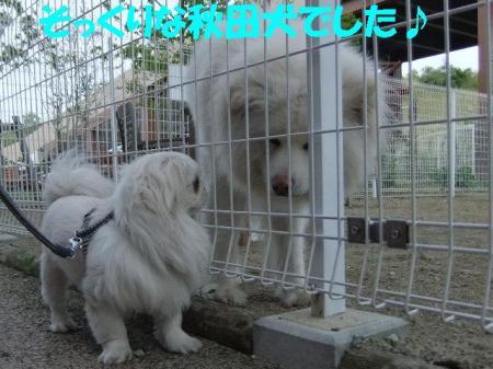 02_convert_20101020085919.jpg