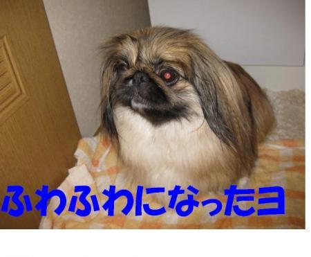 03_convert_20100521233201.jpg