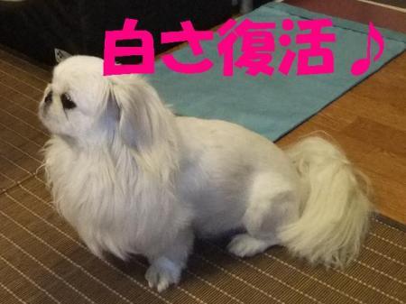 03_convert_20100609073533.jpg