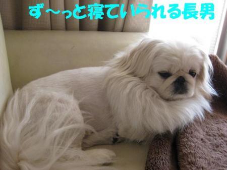 03_convert_20100615085945.jpg