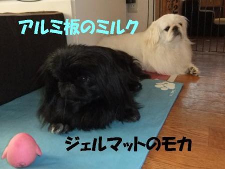 03_convert_20100626092932.jpg