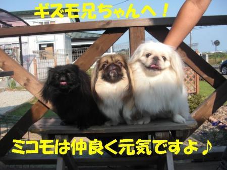 03_convert_20100714085041.jpg
