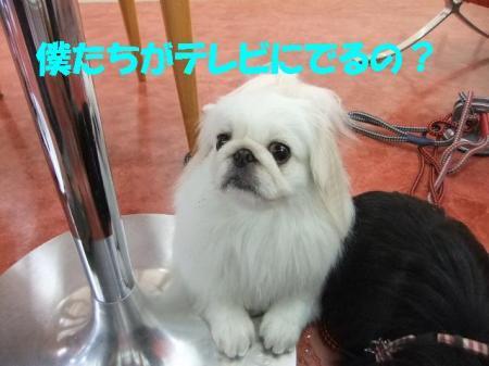 03_convert_20100824092602.jpg
