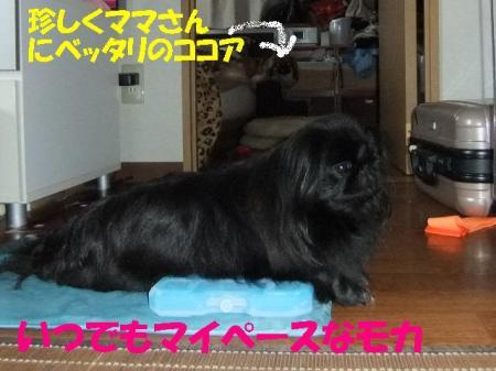 03_convert_20100906083425.jpg
