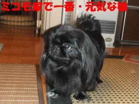 03_convert_20100928165655.jpg