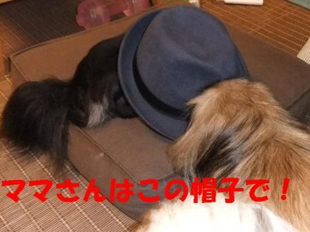 03_convert_20101111074015.jpg