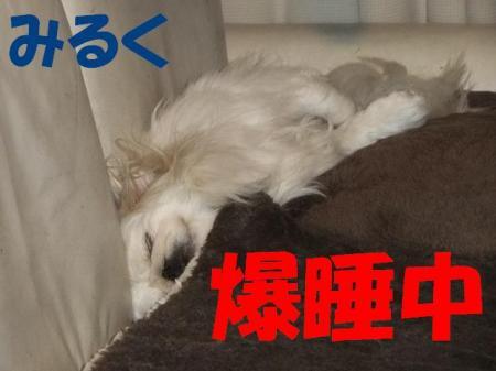 04_convert_20100430231935.jpg