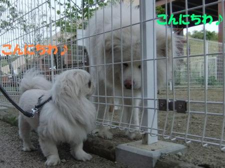 04_convert_20100601080149.jpg