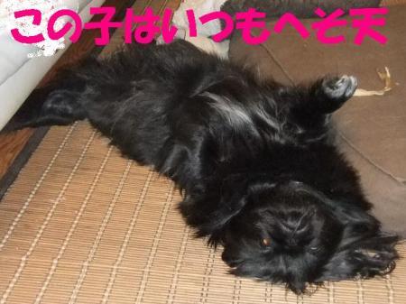 04_convert_20100604084332.jpg