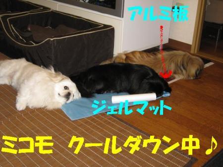 04_convert_20100615090002.jpg