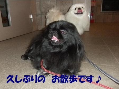 04_convert_20100915092448.jpg