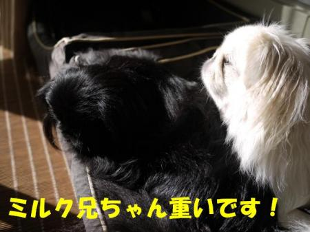 04_convert_20100919103025.jpg