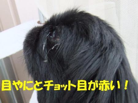 05_convert_20100513084332.jpg