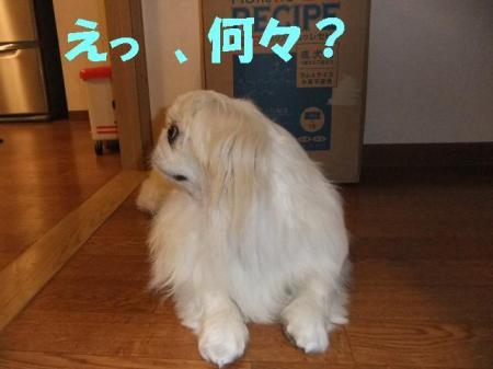 05_convert_20100713115225.jpg