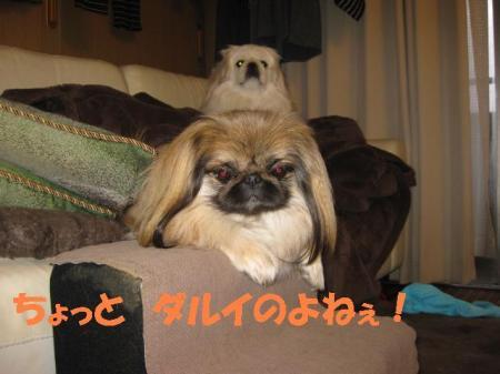 05_convert_20100722111300.jpg