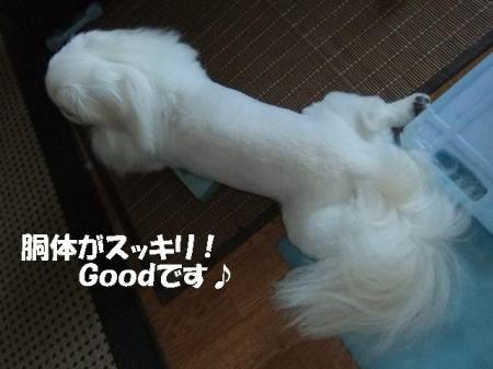 05_convert_20100806093310.jpg